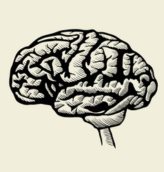 engraving brain vector image