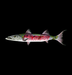fish barracuda with roses vector image