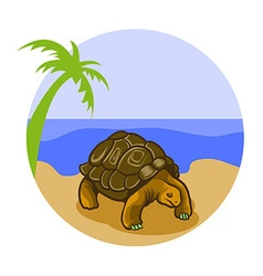 Turtle On The Beach vector image