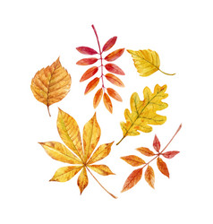 watercolor fall leaves set vector image