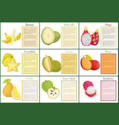 Banana and ambarella durian apple posters vector