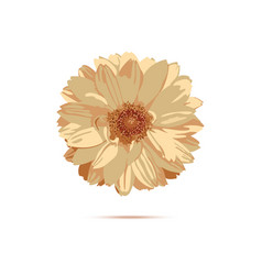 chrysanthemum flower floral vector image
