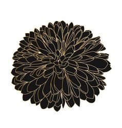 Dark chrysanthemum flower background black flower vector