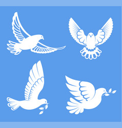 pigeon or dove white bird flying with spread vector image