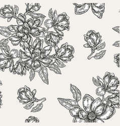vintage magnolia flowers buds and leaves vector image vector image