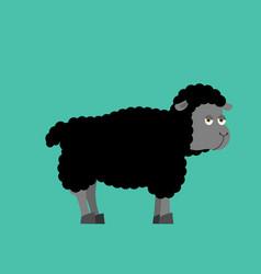 Black sheep farm isolated animal dark ewe on vector