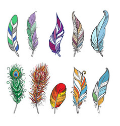 Colorful detailed bird feathers vector
