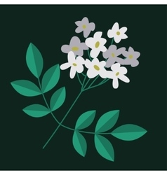 Flowering branch isolated vector image
