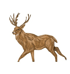 Whitetail buck vector