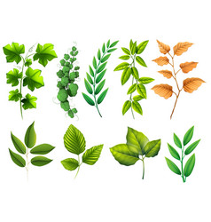 Different types of green leaves vector