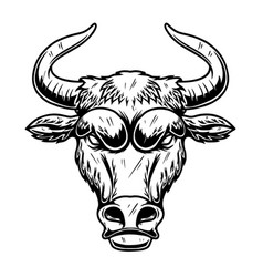 head bull in vintage monochrome style design vector image