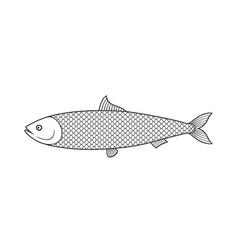 herring vector image
