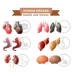 Human Organs Heath Risks Medical Poster vector image