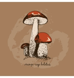 Orange-cap boletus vector