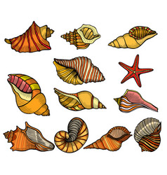 Sea shell set vector