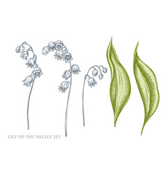 Set hand drawn pastel lily valley vector
