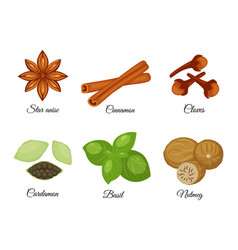Set of different spices star anise cinnamon vector