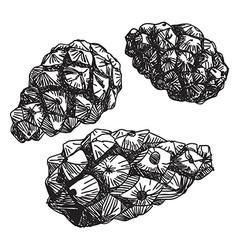 Set pine cones black contour on a white vector