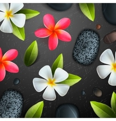 Spa concept background vector image vector image
