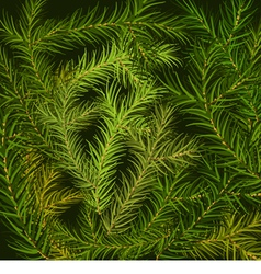 Fir branch background vector image
