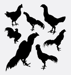 Rooster cock hen chicken silhouette vector image vector image