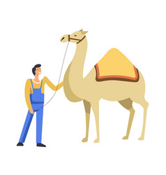 Animal egyptian camel with owner caring for it vector