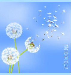 Dandelion seeds blowing away on the wind vector