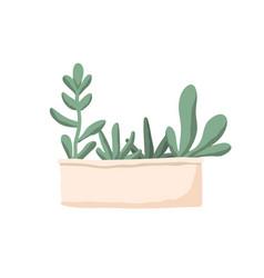 Group succulents in long rectangular pot or box vector