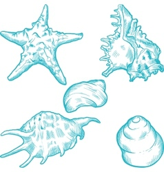 Sea Shells Background vector image