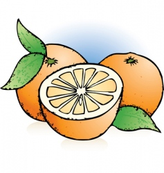 oranges sketch vector image