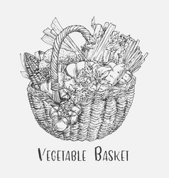 sketch of tomato and corn broccoli in basket vector image