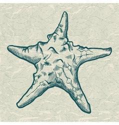 Starfish Background vector image