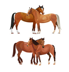 Two horses grooming each other vector