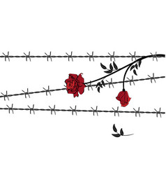 Rose with barbed wire vector