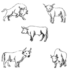 Bulls Sketch pencil Drawing by hand vector image