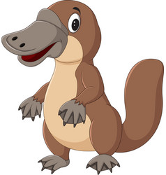Cartoon platypus isolated on white background vector