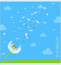 Dandelion seeds blowing away on the wind vector