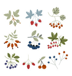 forest berries flat icons blueberry cranberry vector image