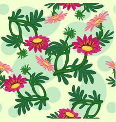gazania flowers seamless pattern vector image
