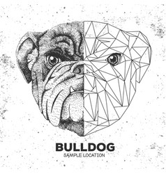 Hipster animal realistic and polygonal bulldog vector