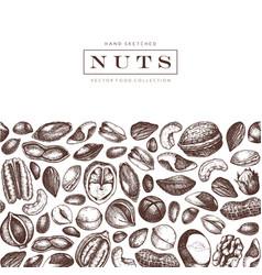nuts design hand drawn pecan macadamia pine nuts vector image