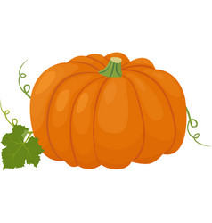 orange pumpkin autumn vector image