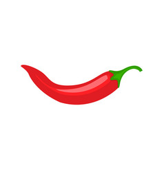 red chili spicy pepper hot chili spice pepper vector image
