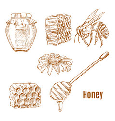 sketches bee and sunflower honey spoon vector image