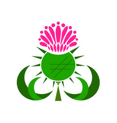 Thistle medicinal plant on white vector