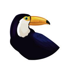 toucan bird icon vector image vector image