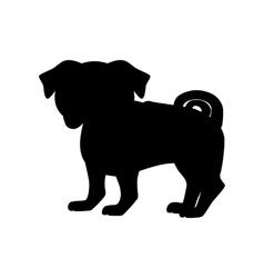 Flat pug pet vector image