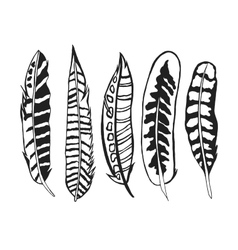 Tribal feathers set vector image