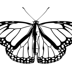 black and white butterfly insect vector image