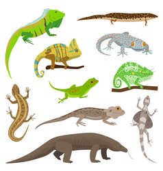 Different lizard reptile animals isolated on white vector
